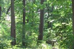 morris-park-fairmount-park_4768951486_o