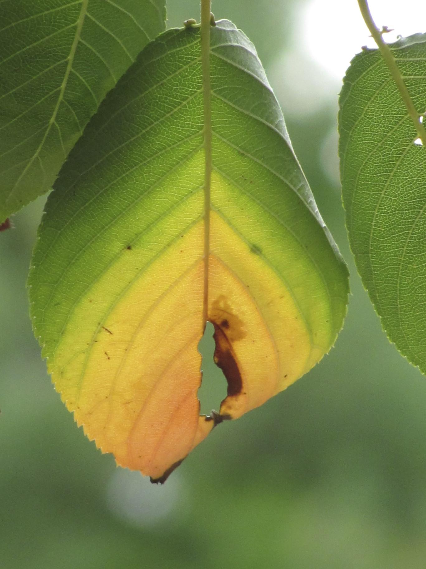 Nature in AutumnDonna L. Long